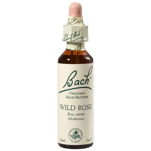 Bachblüten Nr. 37 Wild Rose (20 ml)